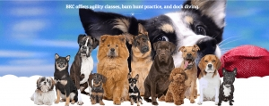 Billings K9 Coaching Dogs